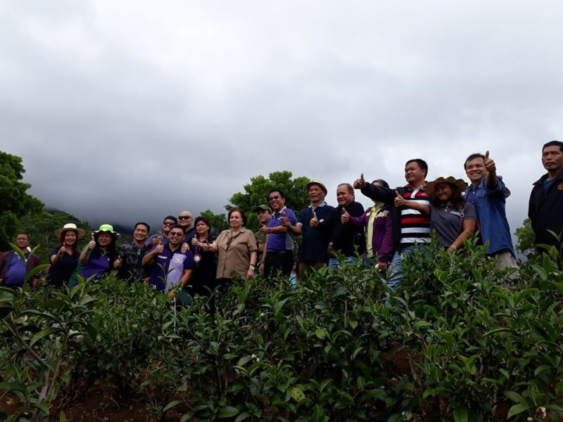 Unang Oolong tea plantasyon gitukoran og processing center