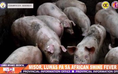 MISOR, LUWAS PA SA AFRICAN SWINE FEVER