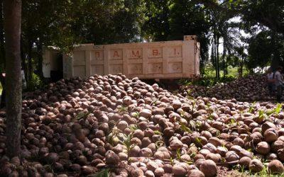 PAGPAKUSOG NI GOV. BAMBI SA COCONUT INDUSTRY GIPASALAMATAN SA PCA-DRC REGION XI